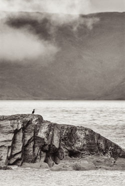 Shag in context with its habitat, rough weather, rocks and sea