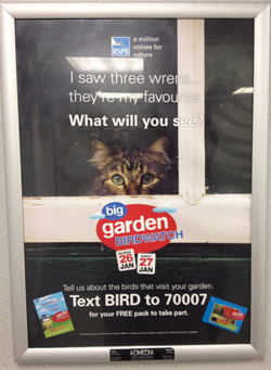 The ad for the big garden birdwatch with a cat looking longingly out from a window